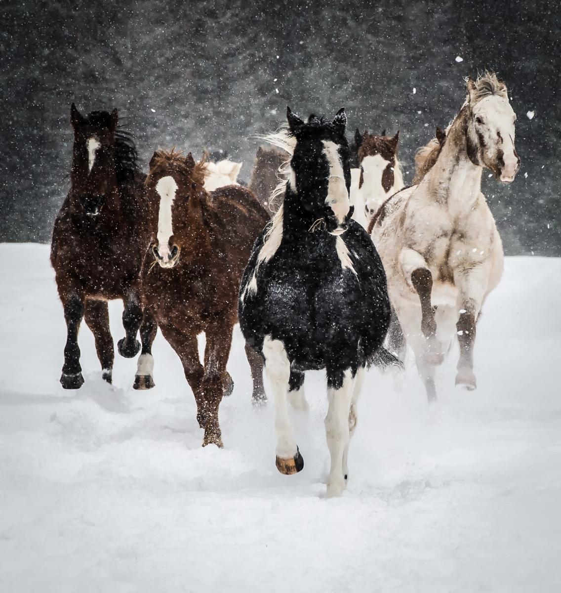 124-Horses