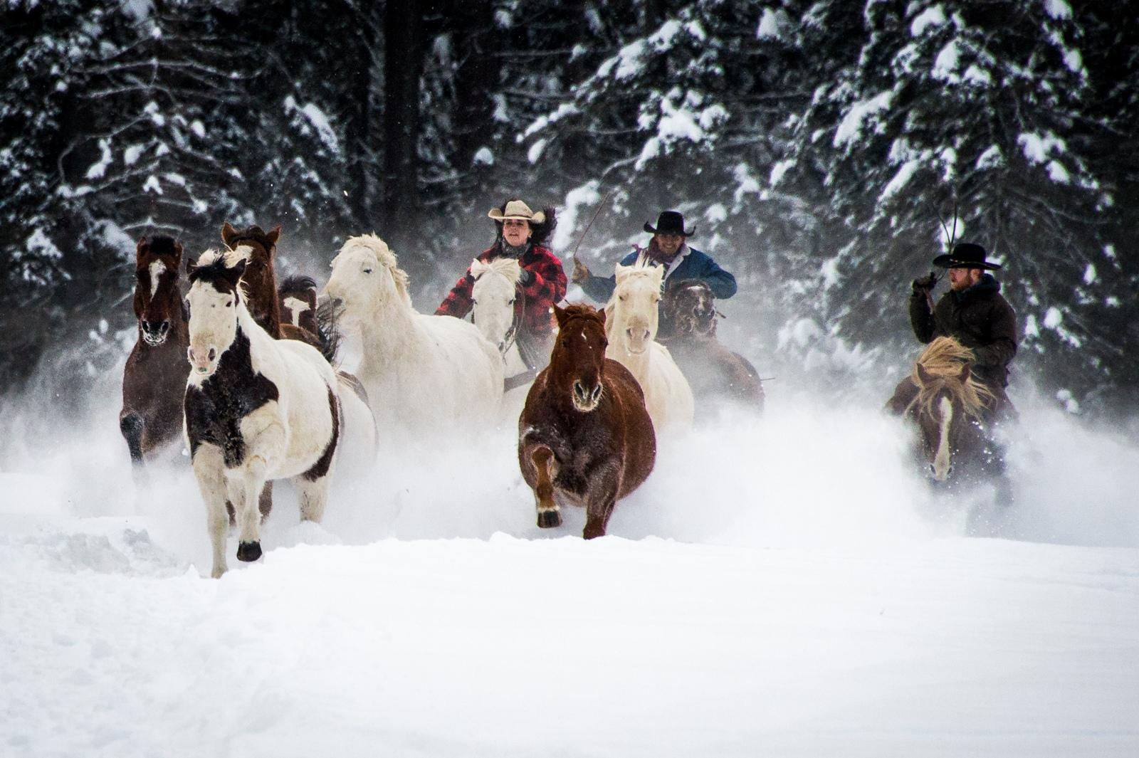 132-Horses