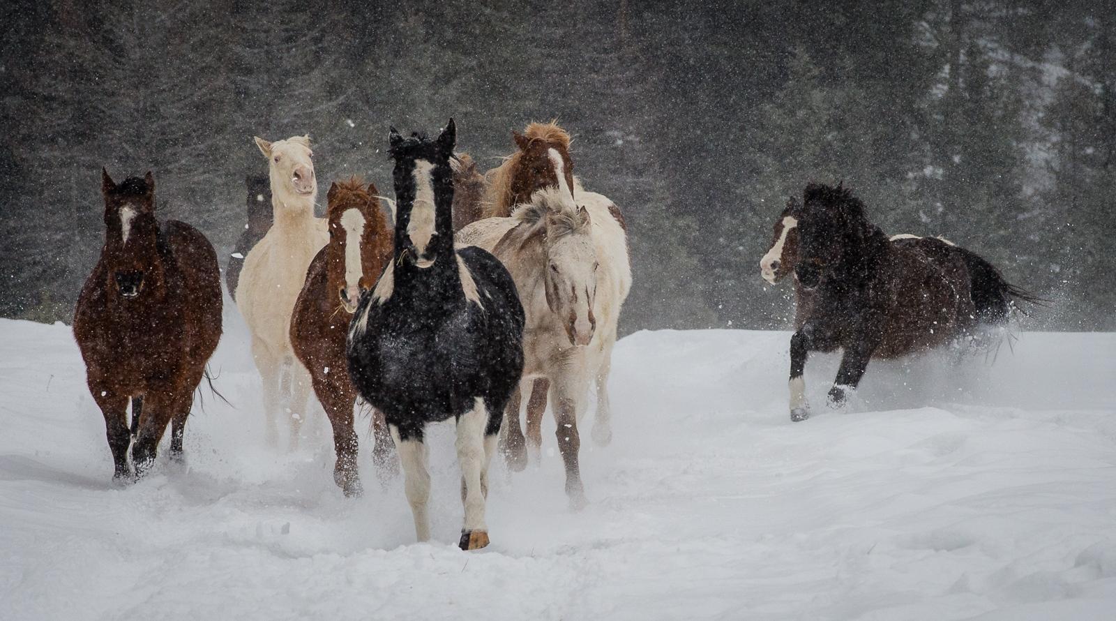 149-Horses
