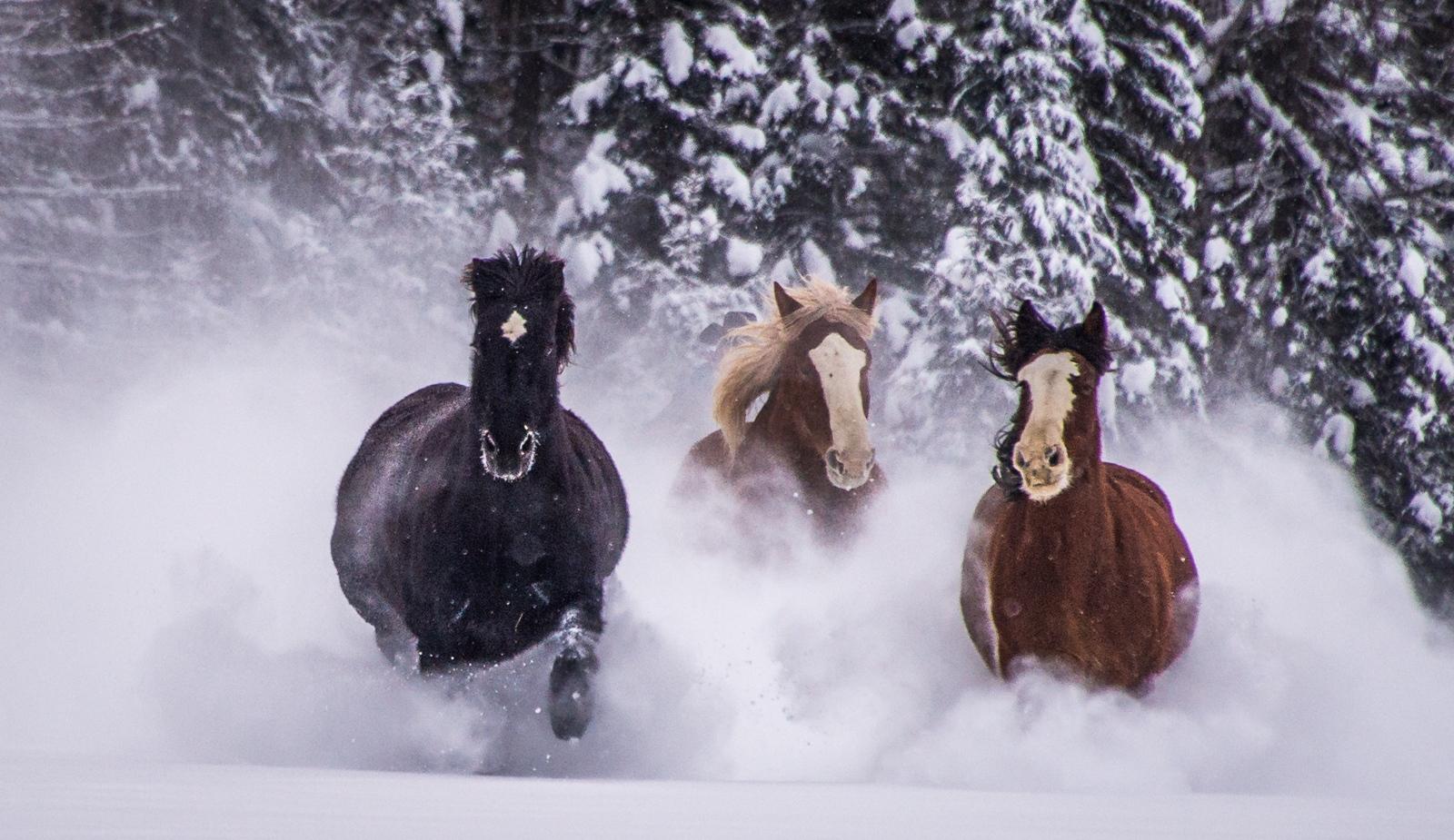 176-Horses