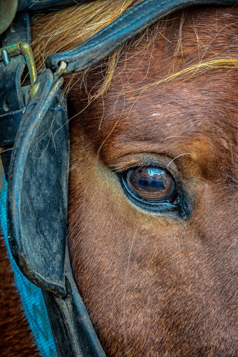 82-Horse