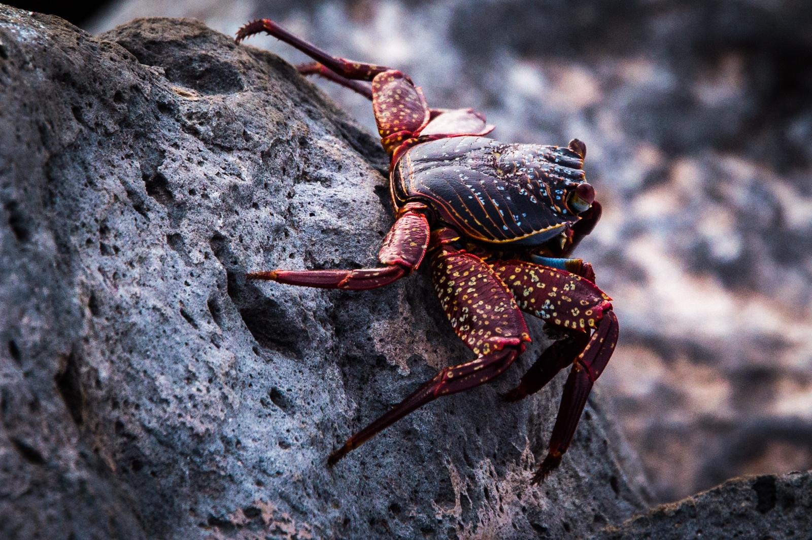 85-Crab