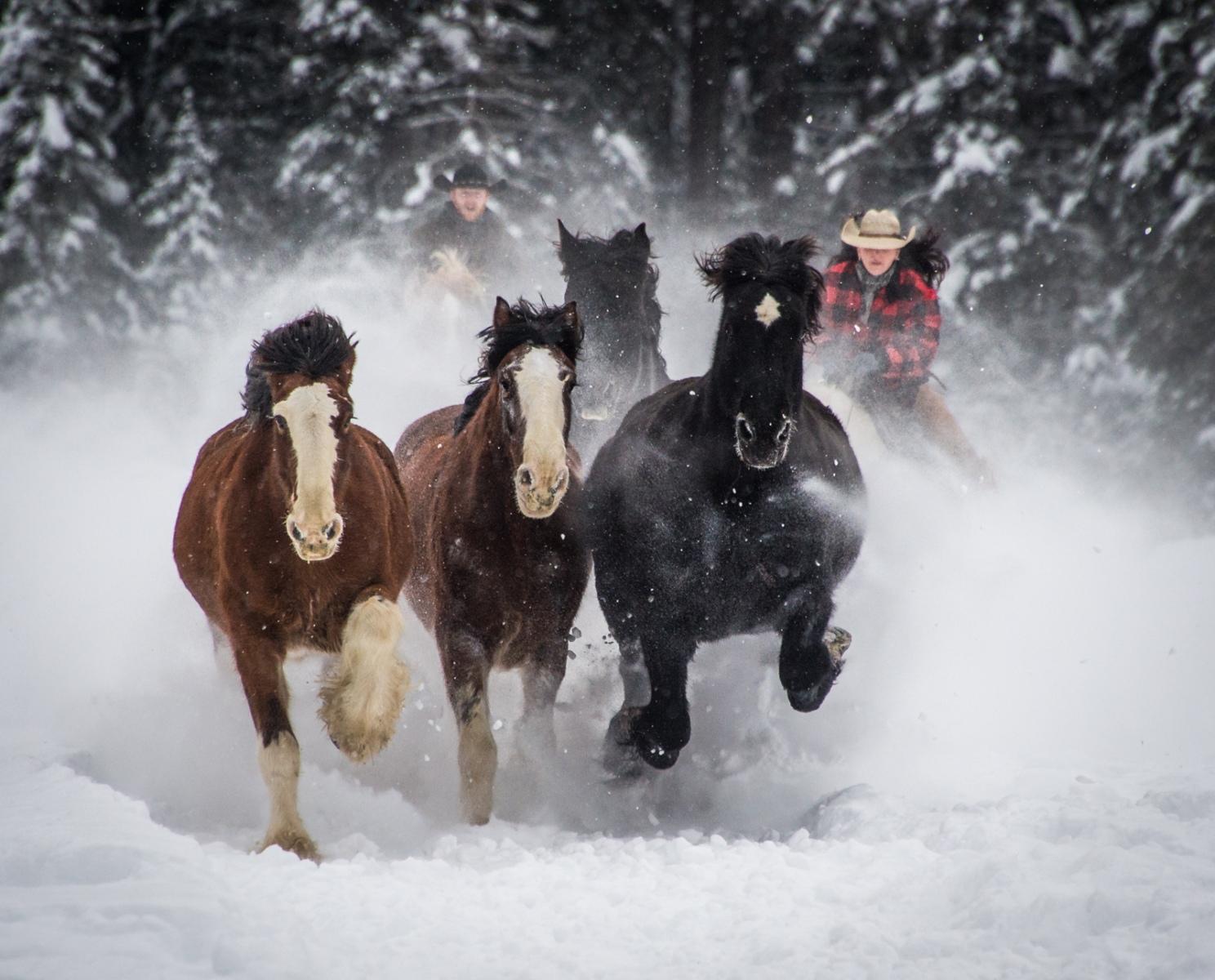 96-Horses