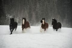 168-Horses