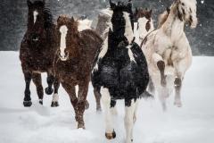 2-Horses