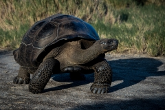 84-Tortise
