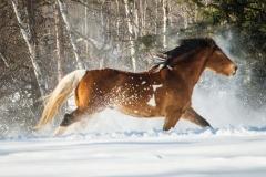 87-Horse