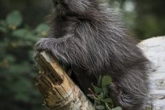 Porcupine Baby
