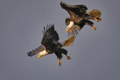 8-Eagles-in-Ariel-Combat