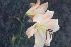 20-Flowers