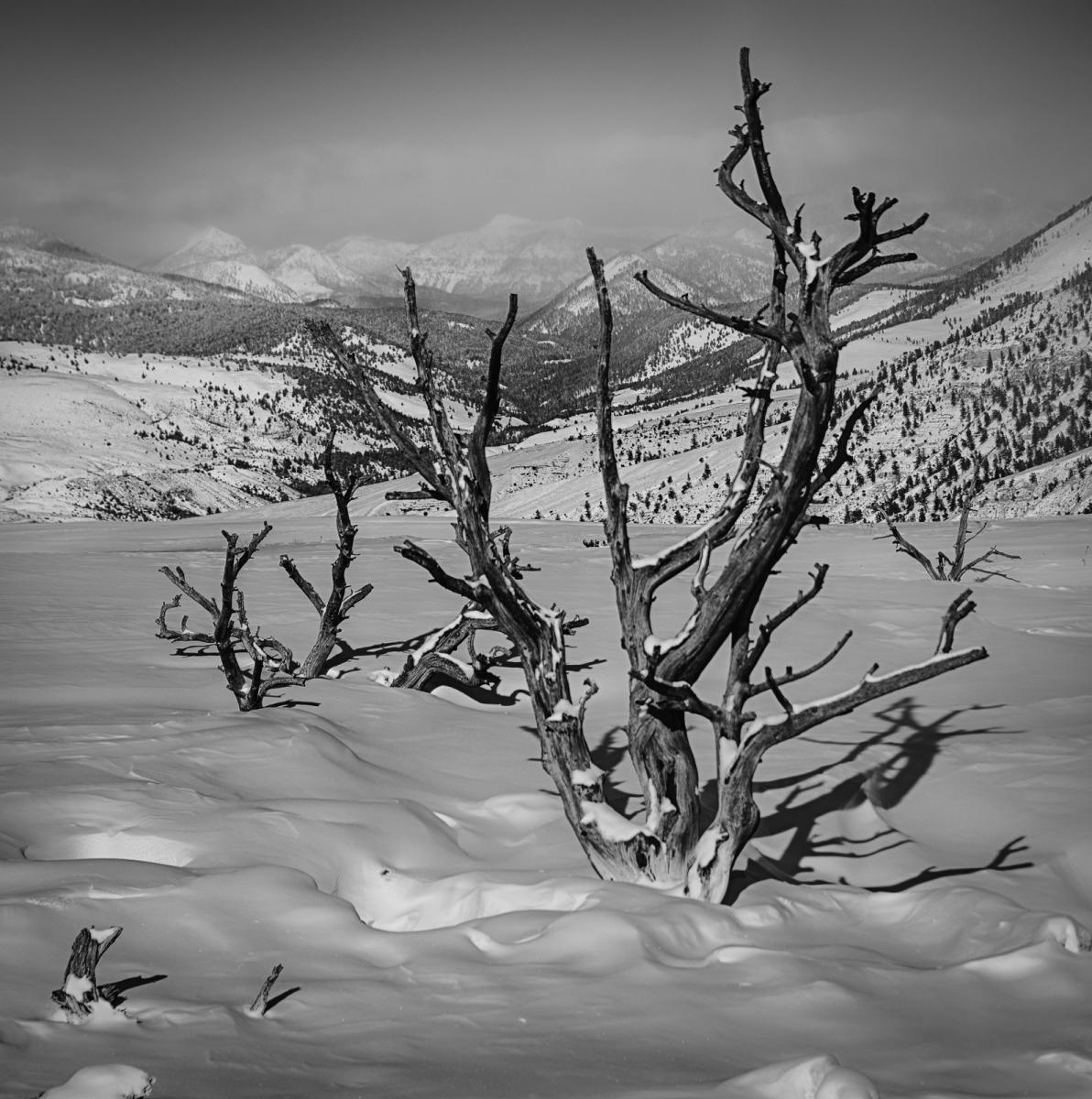 54-Yellowstone