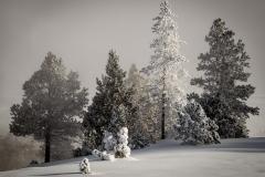 24-Yellowstone