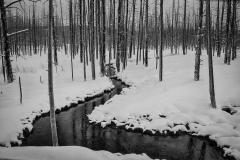 49-Yellowstone
