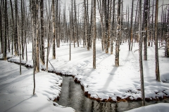 57-Yellowstone