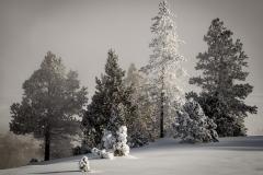 59-Yellowstone
