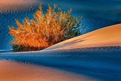 Death-Valley-Bush