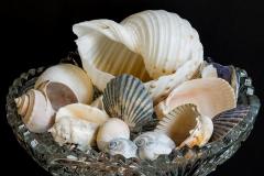 27-Shell-Bowl