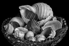 44-Shell-Bowl